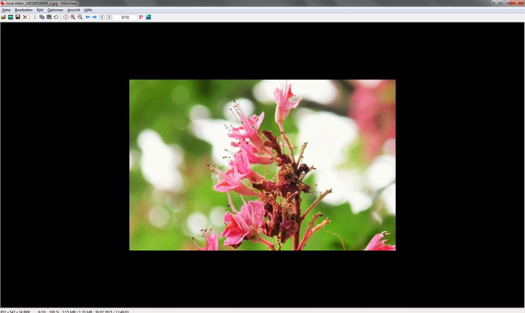 Mit dem kostenlosen Bildbearbeitungsprogramm IrfanView kann ein Ausschnitt des Bildes freigstellt werden