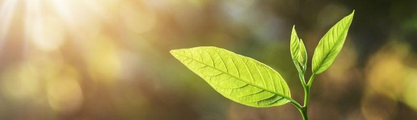 Ökologische Apps - Wie können Sie nachhaltig bei der Appnutzung sein