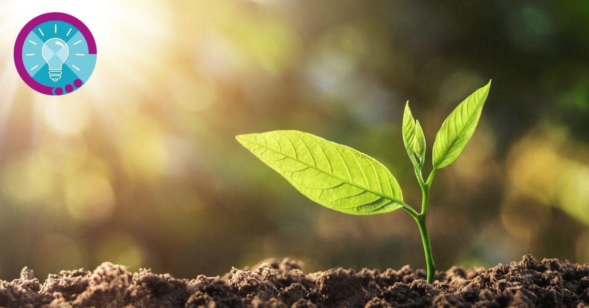 Ökologische Apps - Wie Sie Ihre Mediennutzung nachhaltig gestalten können